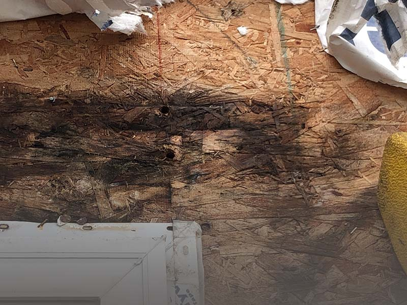 condo building water intrusion assessment
